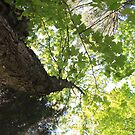 A bugs canopy by Sonya Lynn Potts
