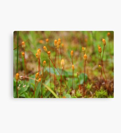Micro Forest Canvas Print