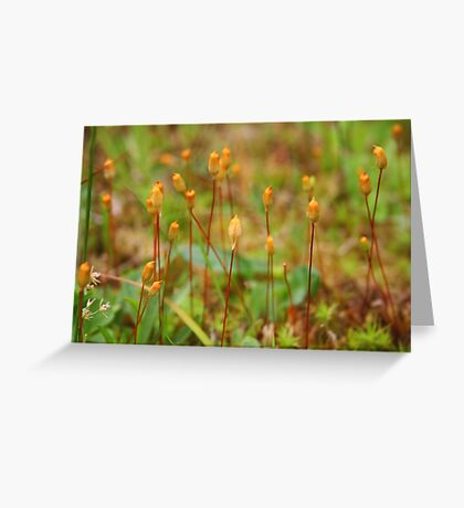 Micro Forest Greeting Card
