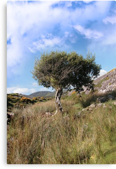 strong isolated mountain tree by morrbyte
