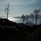 Angel Island by Rodney Johnson