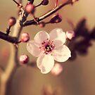 Spring Blossom by EkaterinaLa