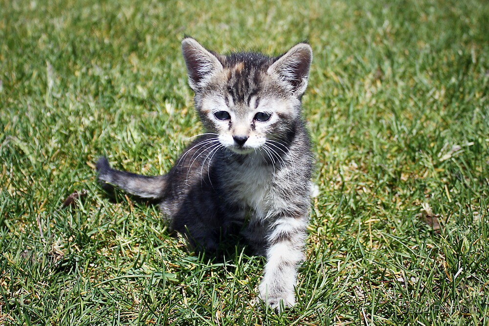 Clank the Kitten by Jewel Pfaffroth