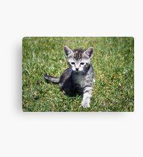 Clank the Kitten Canvas Print