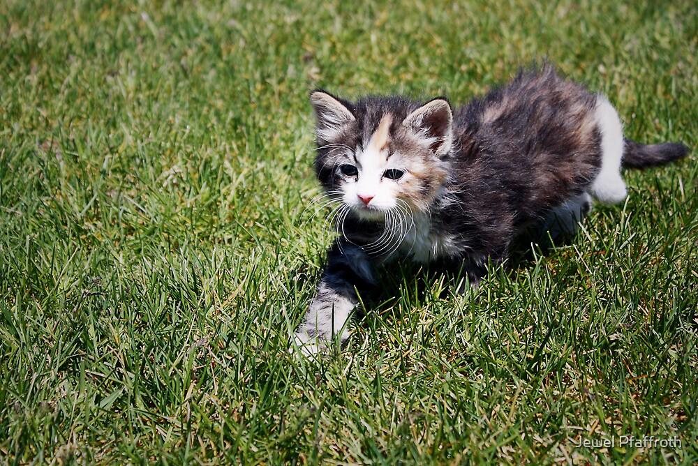 Calvin the Kitten by Jewel Pfaffroth
