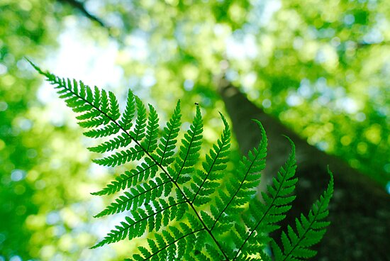 Fern leaf and spring forest by intensivelight