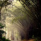 ooty - India by marick