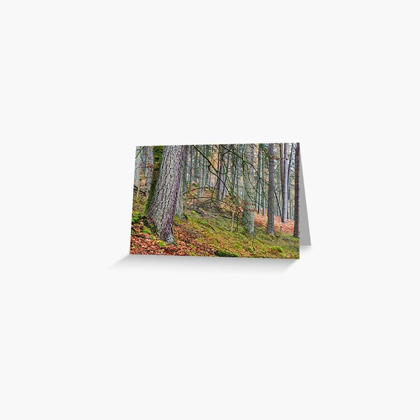 Pine Forest in Claerwen Valley Mid Wales Greeting Card
