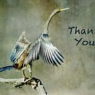 Thank You by Eve Parry