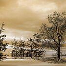 Serenade ! by Elfriede Fulda