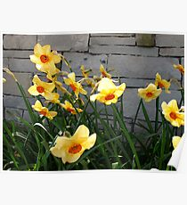 Giggling Narcissis Poster