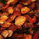 Autumns End by Claire Walsh