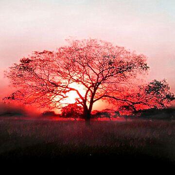Scarlet sunrise by Street-Art