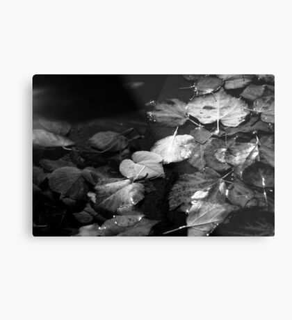 Dead in the Water Metal Print
