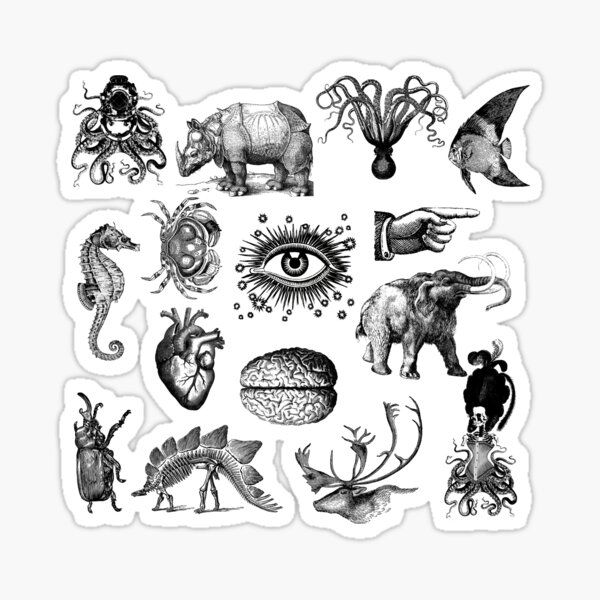 Cabinet of curiosities Sticker