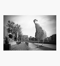 Dublin seagull at the Liffey Photographic Print