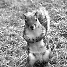 Dublin squirrel in black and white  by Esther  Moliné