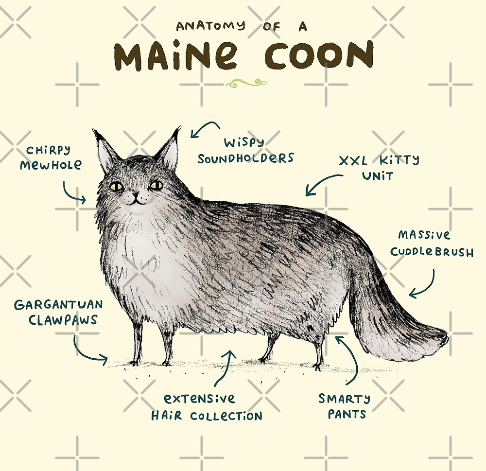 Anatomy of a Maine Coon\