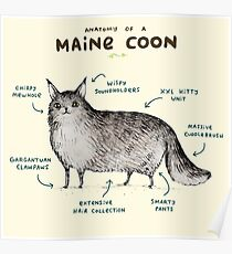 Anatomy of a Maine Coon Poster