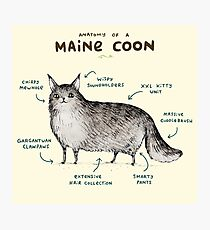 Anatomy of a Maine Coon Photographic Print
