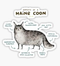 Anatomy of a Maine Coon Sticker