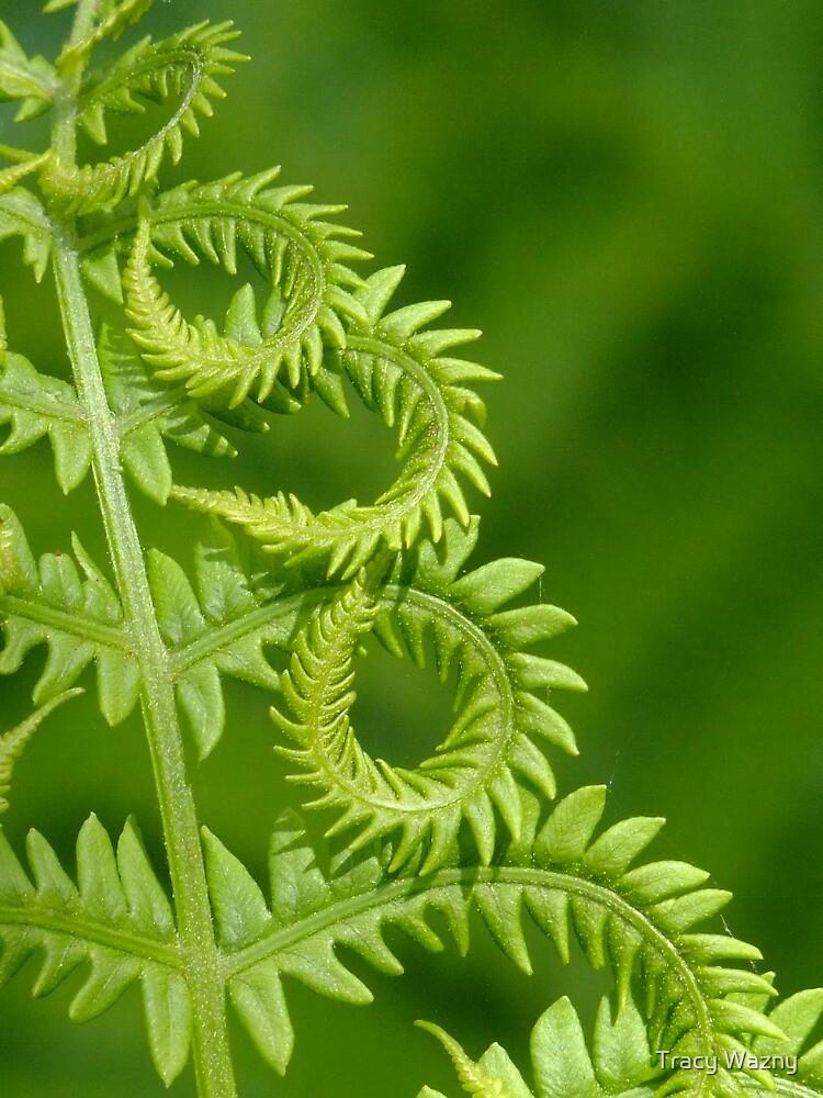 Fern Leaf Detail by Tracy Wazny