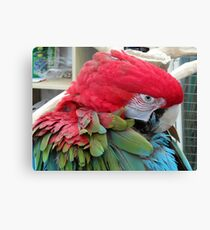 32 - PARROT - DAVE EDWARDS - 2012 Canvas Print