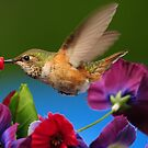 17 FEATURES...ITS SUCH A THRILL TO PHOTOGRAPH THESE HUMMINGBIRDS by RoseMarie747