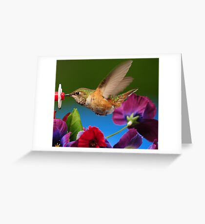 17 FEATURES...ITS SUCH A THRILL TO PHOTOGRAPH THESE HUMMINGBIRDS Greeting Card