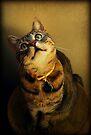 Yes.....I Know I Am Cute:) by jodi payne