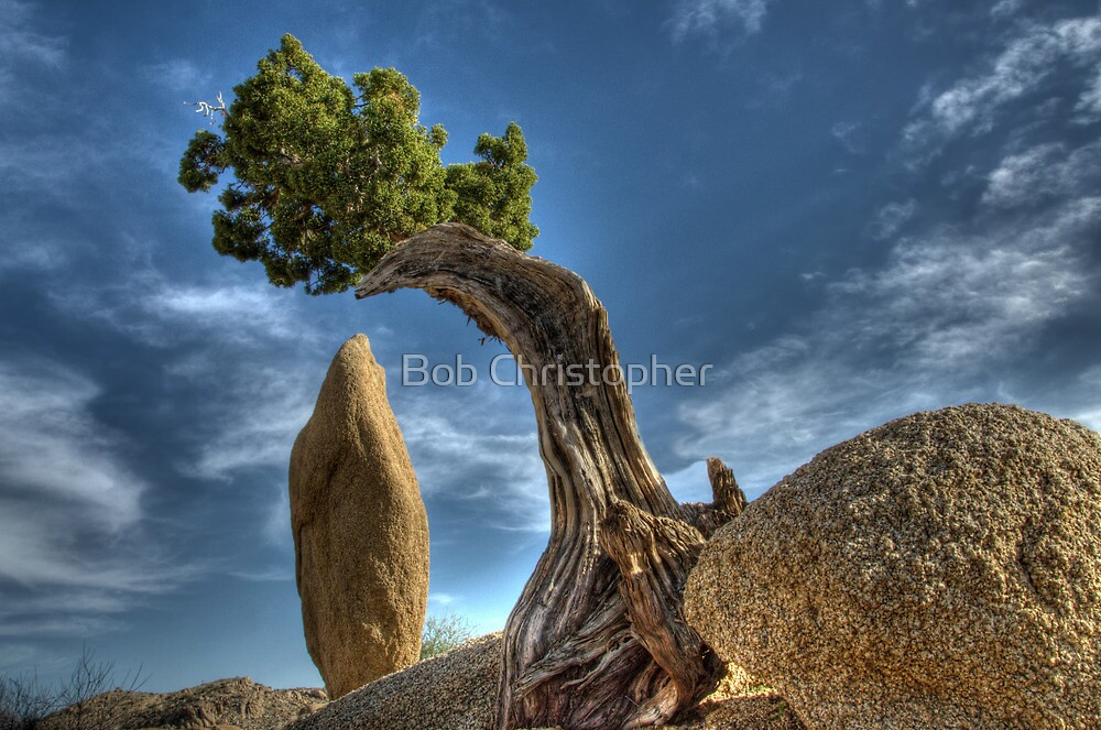 Tree And Stone by Bob Christopher