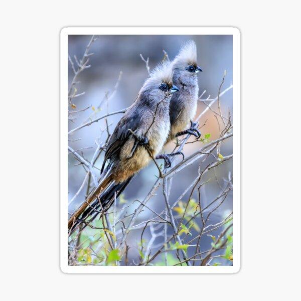 A pair of mousebirds Sticker