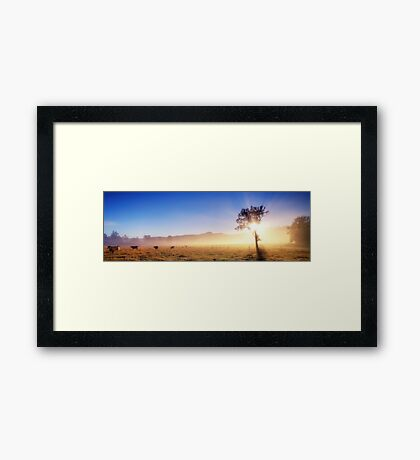 See The Light Framed Print