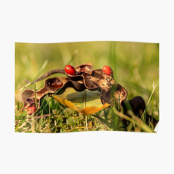 Coral tree pod Poster
