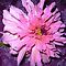 *Feature Page/Dahlia - Enchanted Flowers*