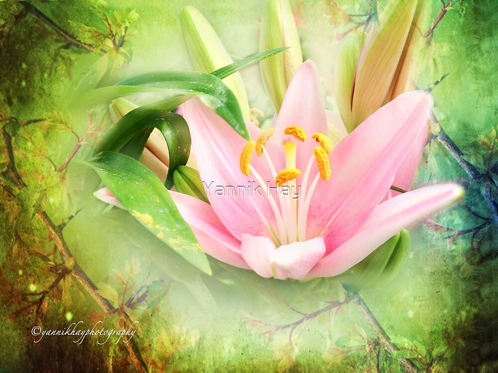 My Pink Lily by Yannik Hay