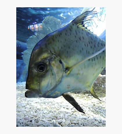 Friendly Fish Photographic Print