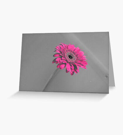 Fuschia Gerbera Greeting Card