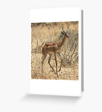 Gerenuk 2 Greeting Card