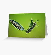 Monarch Caterpillars Greeting Card