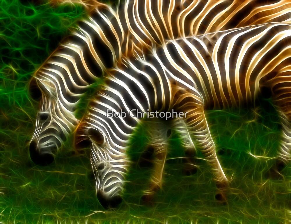 Zebras by Bob Christopher