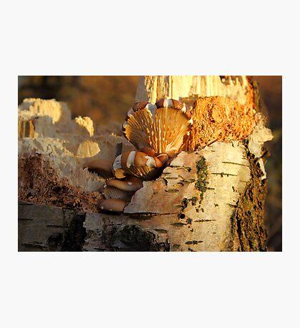 A Fungi to Love Photographic Print