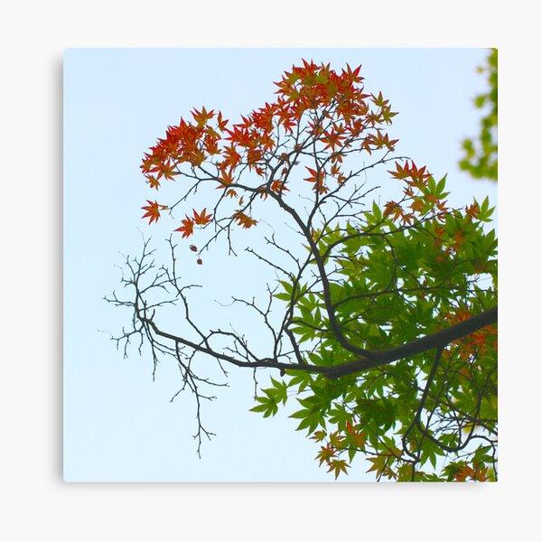 Three seasons Canvas Print