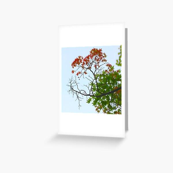 Three seasons Greeting Card