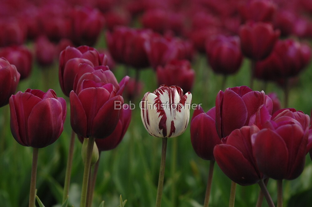 It Is Fun Being Different by Bob Christopher
