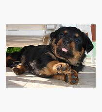 Cute Rottweiler Puppy Being Playful Photographic Print