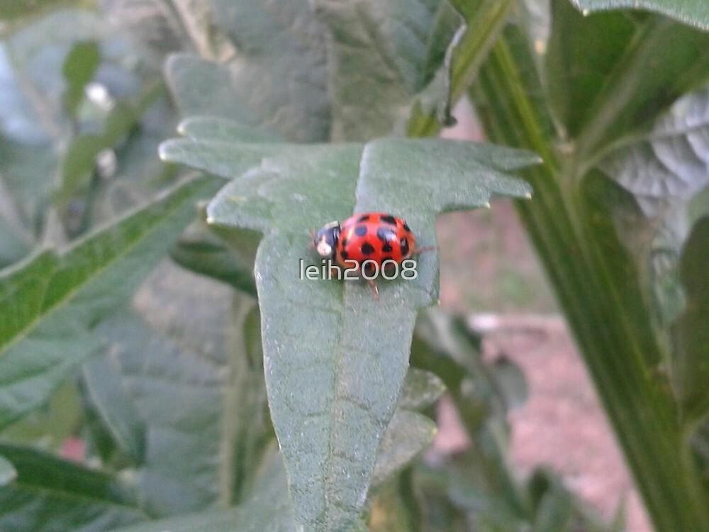 Lady bug 2012  by leih2008