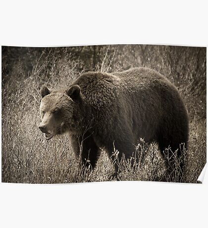 Mr. Grizzly Poster