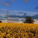 Sundown On The Yellow Fields by J J  Everson