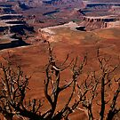 The Green River in Canyonland by Daniel H Chui